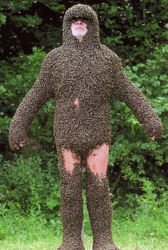 bees on man